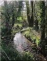 SX2578 : Stream, Stonaford by Derek Harper