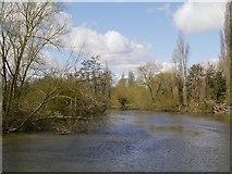 SU9778 : River Thames near Romney Island by David Dixon