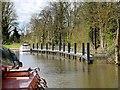SU9777 : River Thames, Moorings for Romney Lock by David Dixon