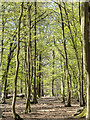 TQ2897 : Through the Woods, Trent Park, Cockfosters, Hertfordshire by Christine Matthews