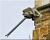 TA0816 : Gargoyle, St Andrew's Church, Wootton, N Lincs by Paul Harrop