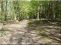 TL1825 : Footpath in Wain Wood by Humphrey Bolton