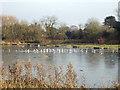 SP2964 : Seagulls on ice, Kingfisher Pool, Myton Fields, Warwick by Robin Stott