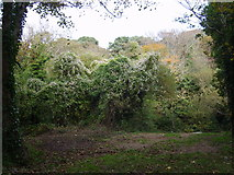J3731 : The overgrown grounds of the derelict Shimna House by Eric Jones