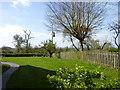 SO9564 : Power Lines outside a garden by Jeff Gogarty