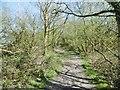 SU4603 : Ashlett, footpath by Mike Faherty