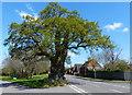 SP3474 : The Baginton Oak tree by Mat Fascione