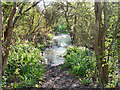 TQ8791 : Flooded path by Robin Webster