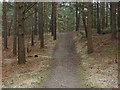 SU9255 : Woods near Ash Ranges by Alan Hunt