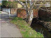 TQ1649 : Pipp Brook, Dorking by Alan Hunt