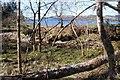 NR9994 : Barnacarry Burn nearing Loch Fyne by Alan Reid
