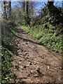 SX3772 : Tamar Valley Discovery Trail by Derek Harper