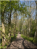 SJ8092 : A path in Chorlton Ees and Ivy Green Nature Reserve by Ian Greig