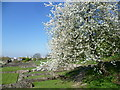 TQ4778 : Springtime at Lesnes Abbey by Marathon