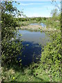 SE3806 : Pond by The River Dearne by Neil Theasby