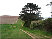 SY0782 : On the South West Coast Path by David Purchase