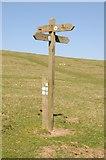 SO2555 : Footpath/bridleway sign on Hergest Ridge by Philip Halling