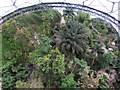 SX0455 : Tropical Biome of the Eden Project by Gareth James