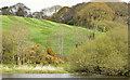 J5047 : Drumlin by the Quoile, Downpatrick (May 2015) by Albert Bridge
