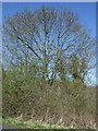NU1903 : Woodland beside the road near Brainshaugh by JThomas
