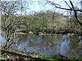 NU2003 : River Coquet near Guyzance  by JThomas