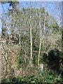 NU2004 : Woodland near Guyzance  by JThomas