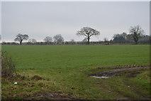 TG0705 : Field by Skipping Block by N Chadwick