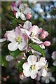 TQ7094 : Apple Blossom & Little Critter by Glyn Baker