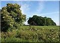 SK0871 : Small wood near Cumberland Farm by Derek Harper