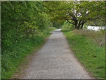 TQ0866 : Thames Towpath near Weybridge by Alan Hunt