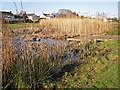 NY3258 : Pond dipping platform and reed beds by Rose and Trev Clough