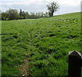 SO5824 : Herefordshire Trail, Bridstow by Jaggery
