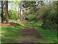 TM4664 : Track in Sizewell Belts Nature Reserve by Roger Jones