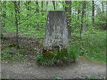 SP8906 : Triangulation Pillar in Great Widmoor Wood by David Hillas