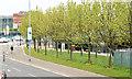 J3474 : Trees, Queen's Quay, Belfast (May 2015) by Albert Bridge