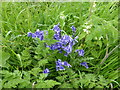 SK9829 : Nettle and Bluebell by Bob Harvey