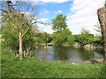 SU6462 : Pond by Silchester Church by Des Blenkinsopp