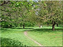 TQ2780 : Path, Hyde Park by Stephen Richards