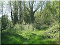 SP2865 : Seedlings of alder and willow colonising ground, Priory Park, Warwick by Robin Stott