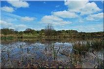 SJ9248 : Wetley Moor Common by Stu JP