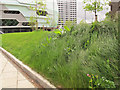 SE3034 : What a difference mowing makes by Stephen Craven