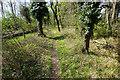 TL6469 : Path in Chippenham Fen by Bill Boaden