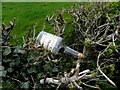 H4763 : Whiskey bottle in a hedge, Mullaghmore by Kenneth  Allen