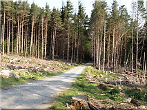 J3629 : Forest road in Donard Wood by Eric Jones