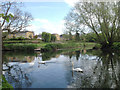 SP3065 : Confluence of the River Leam and the River Avon, from the Warwick side by Robin Stott