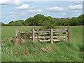 SU9961 : Bourne Meadows near Chobham by Alan Hunt