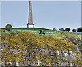 J3686 : Knockagh war memorial (distant view) (May 2015) by Albert Bridge