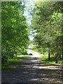 SU8968 : Track on Whitmoor Bog by Shazz