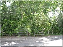 TQ2181 : Path into Old Oak Common by David Hawgood