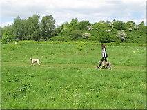 TQ2181 : Wormwood Scrubs with dog walker by David Hawgood